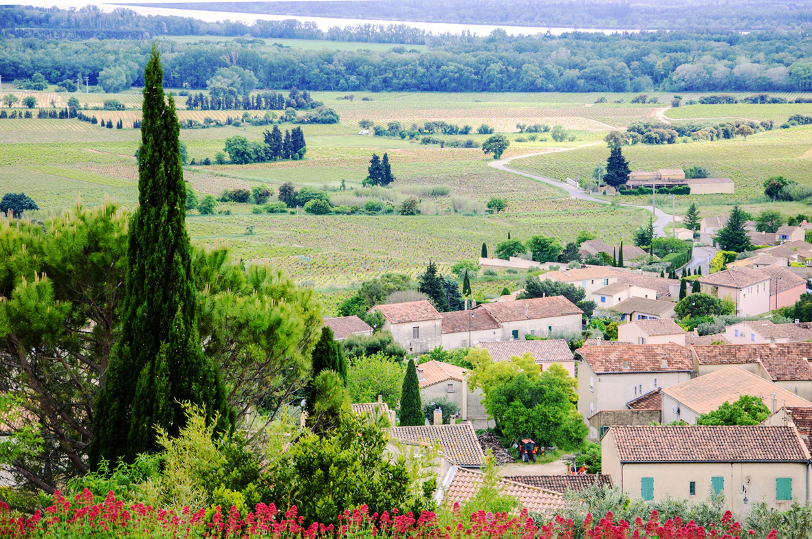 Chateauneuf-du-Pape-vineyard
